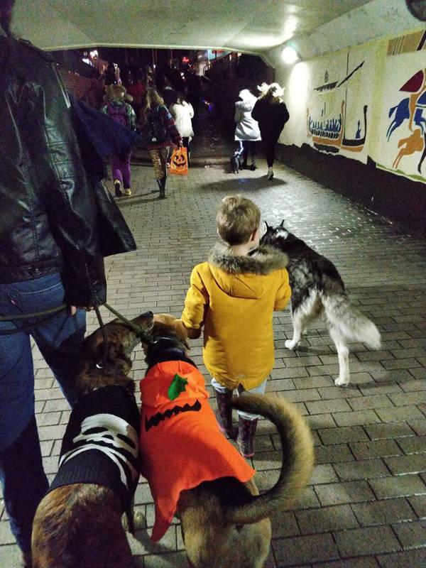 Halloween Dog Walk