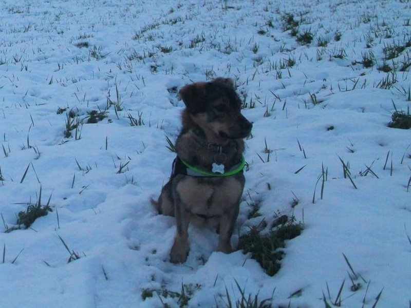 Belle in the snow