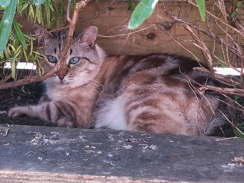 Costi relaxing in her outdoor enclosure