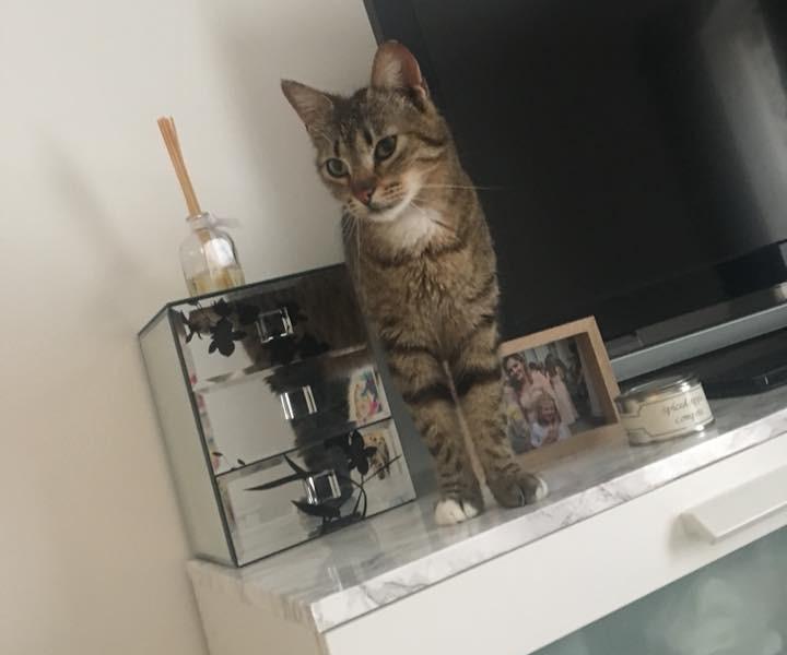 Bindi on the furniture