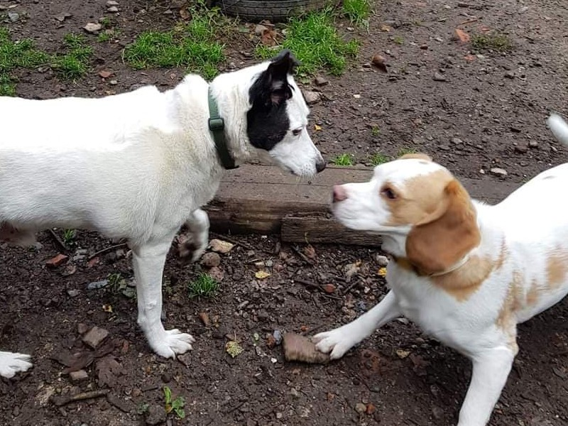 Spot playing with a friend