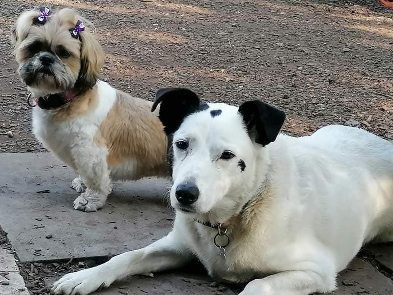 Spot with his sister