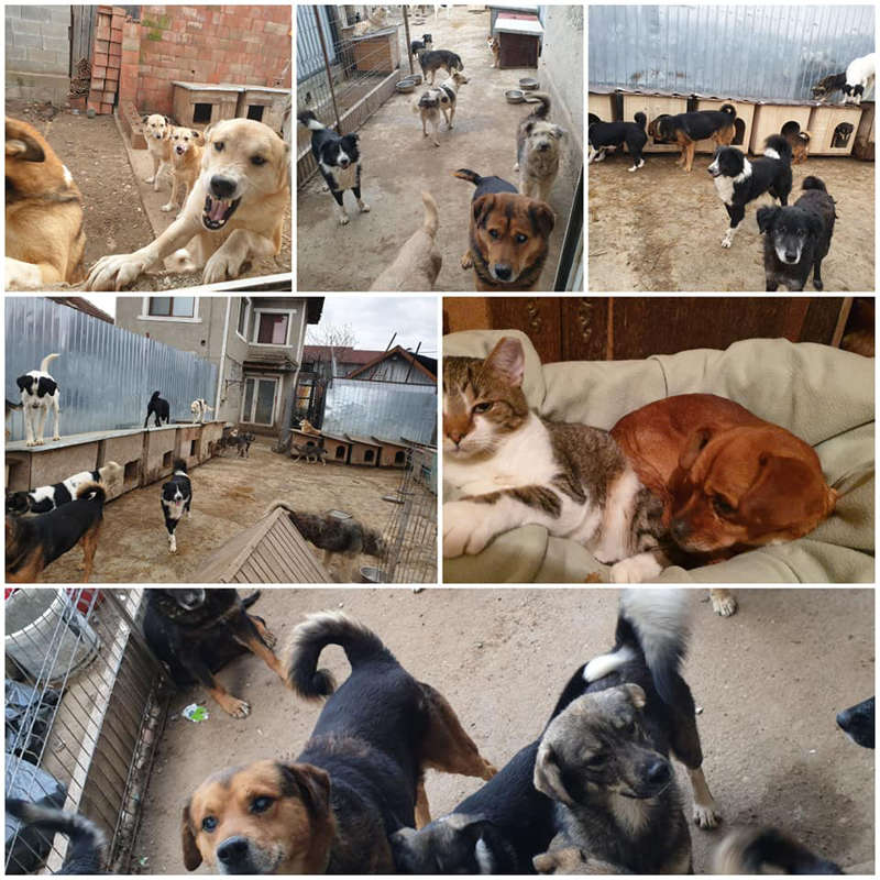 Tesa's Rescue Shelter in Romania